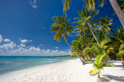 Caribbean beach with palmtress